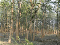 Natural forests